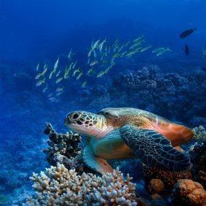 Top Scuba Diving Destinations